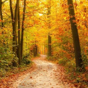 Marketing planning Autumn - check your customer journey